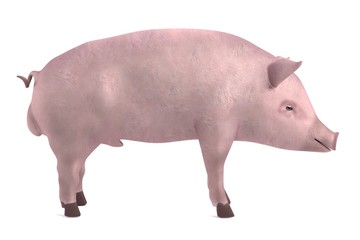 realistic 3d render of male pig