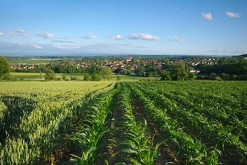 Campagne à Eschentzwiller, Alsace , Haut-rhin .