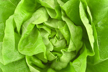 Close up of fresh lettuce as background