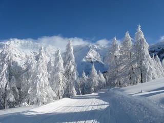 abbondante nevicata