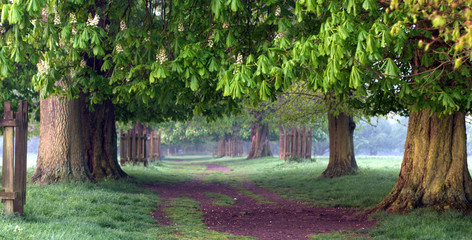 misty pathway
