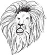 lion head black sketch on white