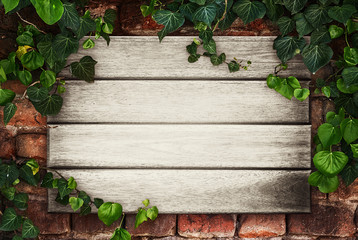 Wooden boards framed by ivy -Place for your advertisement