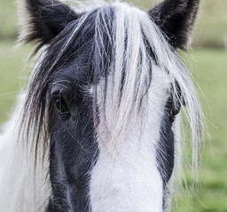 Beautiful picture of a horse's head