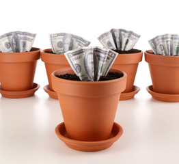 Business concept: growing money in the flowerpots, isolated