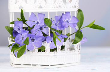 Beautiful periwinkle flowers in decorative cage on wooden table