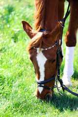 Purebred horse on nature background