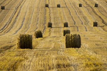 Тюки соломы на фермерском участке