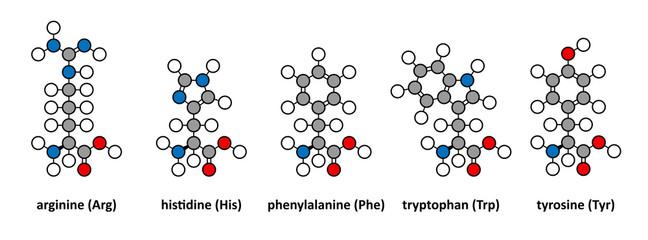 Arginine, histidine, phenylalanine, tryptophan and tyrosine