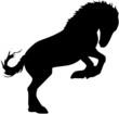 Pferd