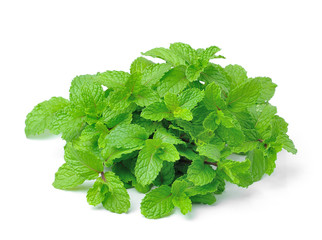 mint isolated on white  background
