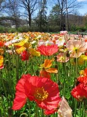 Flower garden in canberra, Australia