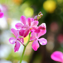 Orchid flower blossom in garden