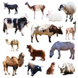 Set of farm animals. Isolated  with shade