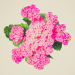 Retro look Kalanchoe flower