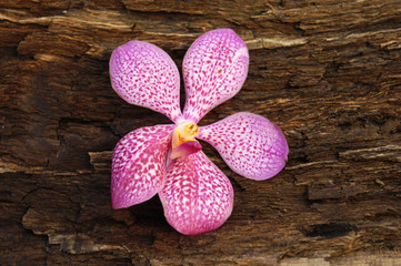 Pink orchid flowers on driftwood texture