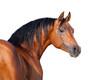 Leinwanddruck Bild - Chestnut horse head isolated on white background, Arabian horse.