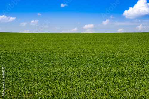 canvas print picture Green Field