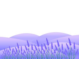 ラベンダー 花 風景