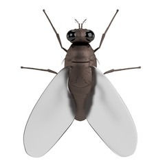 realistic 3d render of fly
