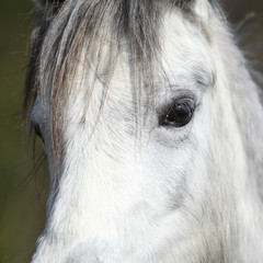 Detail of nice pony