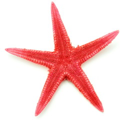 Red seastar ,close up image