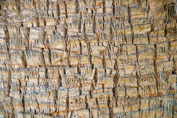 Brown background trunk of a palm closeup.