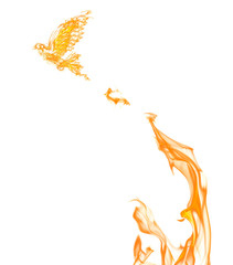 flame dove flying from orange fire isolated on white