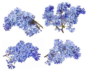 lset of  blue lilac flower branches on white