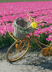 bicycle in flower field