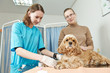 Veterinarian surgeon treating dog