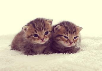striped kittens sleep
