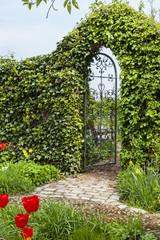Gartentor in einer Buchsbaumhecke