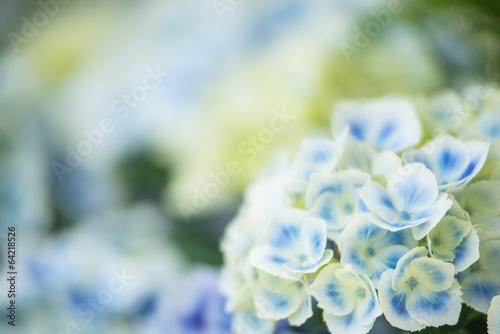 Foto op Canvas Hydrangea 水色の紫陽花