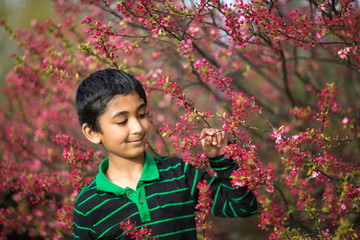 Little Boy Admiring Spring Flowers