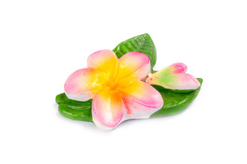 Artificial Plumeria flowers isolate