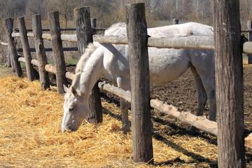 A horse behind a fence