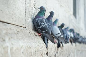 Cliffhanger II - Tauben an der Yeni-Moschee, Istanbul