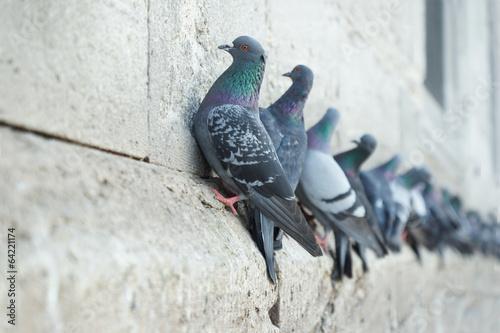 Fototapeta Cliffhanger II - Tauben an der Yeni-Moschee, Istanbul