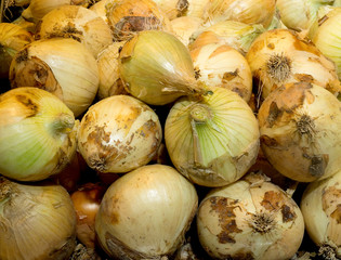 Ecological onions