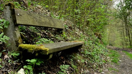 bench overgrown with grass in the forest