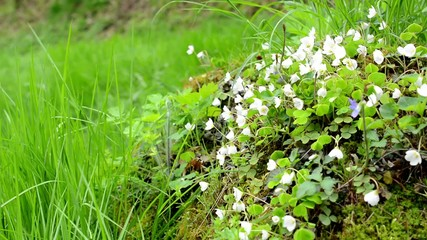 white flowers on the tree stump with grass in the background.