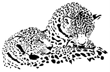 Big cats Jaguar, cheetah, leopard, vector illustration, isolated