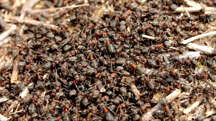 Ants (normal speed footage)