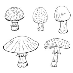 Mushrooms on white background.