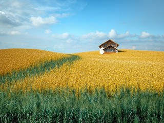 Wheat Field and Farm House