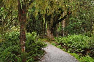Chemin en forêt néo-zélandaise.