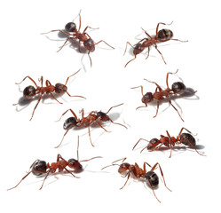 Group of ants collection