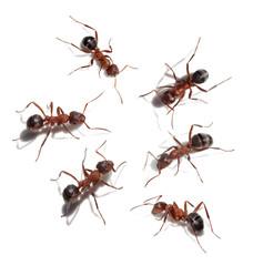 Group of ants meet