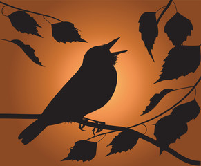 silhouette of the bird singing among the foliage